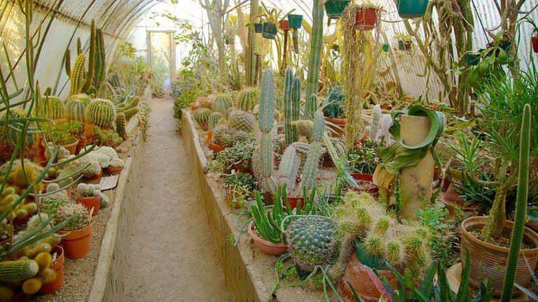Moorten-Botanical-Garden-And-Cactarium-29987